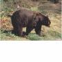 2D lőlap Medve