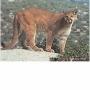 2D lőlap Puma